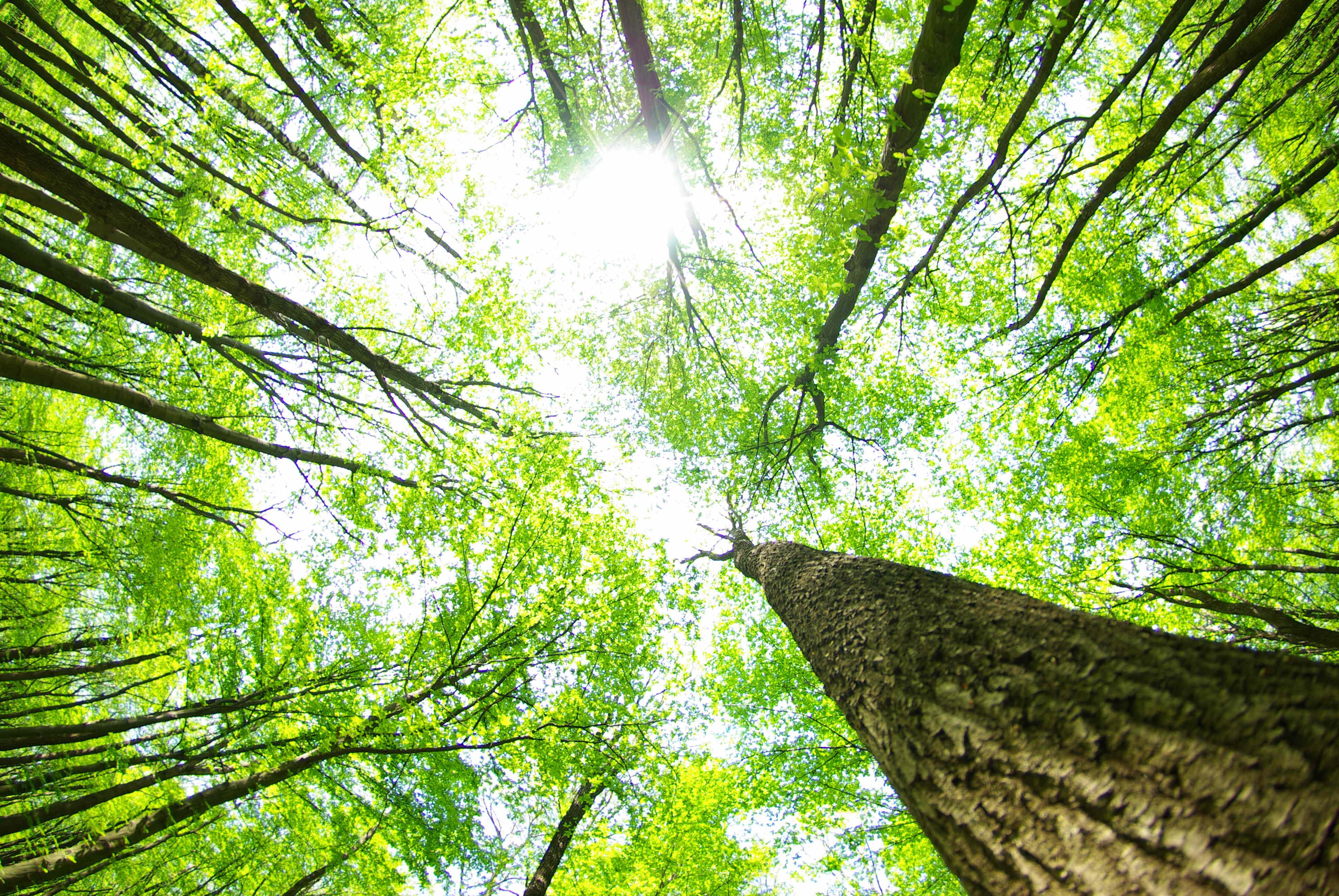 Saiba mais sobre o Objetivo de Desenvolvimento Sustentável 15