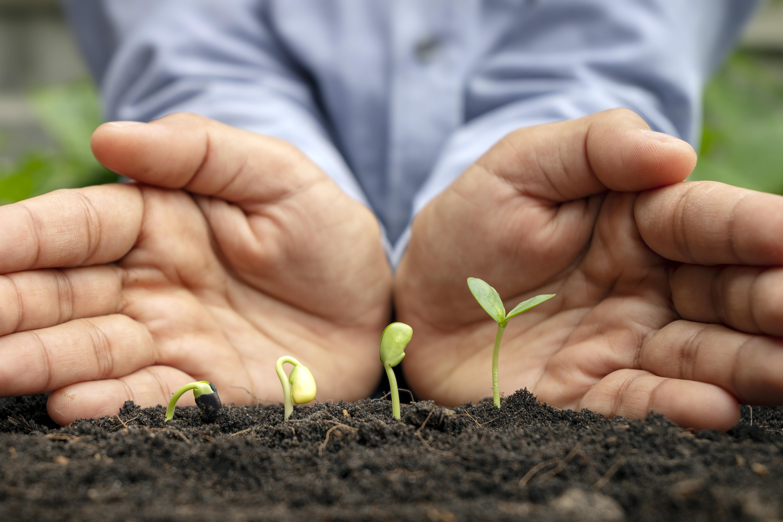 Sustentabilidade na gestão empresarial